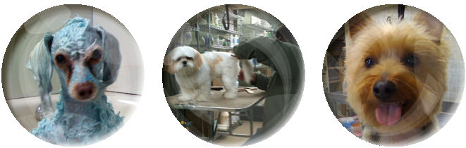 The dog wash jackson ms our new client form and the dog wash guidelines will help streamline your first visit solutioingenieria Choice Image